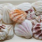 Thema van het strand Schelp Decoratieve Accessoires (40 stuks) (131036844)